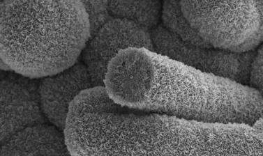 10 C Nanotubes coated with Boron Nitride